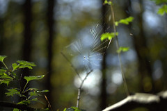 spider-web-mania (infusionn) Tags: autumn light sky tree forest spiderweb september 2014