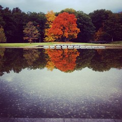 Lone Soldier (angela.liporace) Tags: autumn reflection tree fall nature water museum square landscape foliage williamstown squareformat clark berkshires amaro hilderbrand iphoneography