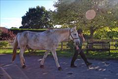 Someone Likes Mud (meniscuslens) Tags: grey mud gray horse retired police hoof hooves groom tree sky flare fence trust charity buckinghamshire bench