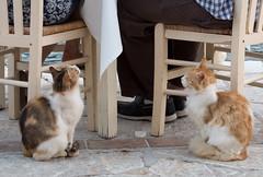 Feed Me! (Rupert Brun) Tags: food cats cat island chair may greece taverna feed ithaca beg 2014 ionian chiars kioni peloponnisosdytikielladakeio peloponnisosdytikielladakeionio