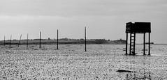 Holy Island Sands #stcuthbertsway #OUMS #leshainesimages #dailyshoot (Leshaines123) Tags: monochrome island mono panasonic holy northumberland relections stcuthbertsway dailyshoot