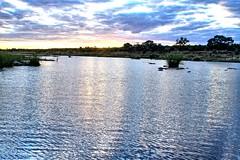 Sunset on a river II (biosynthesis24) Tags: birds southafrica safari giraffe elephants termites impala hippos cheetahs krugernationalpark waterbuffalo crocodiles wildebeest kruger zebras hyenas dika mopani impalaflower