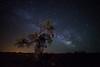 Milky way (Antonio Carrillo (Ancalop)) Tags: longexposure tree night canon way stars arbol noche murcia le estrellas 28 universe canondslr milky milkyway universo caravaca caravacadelacruz largaexposición 14mm samyang antoniocarrillo losroyos samyang14mm ancalop