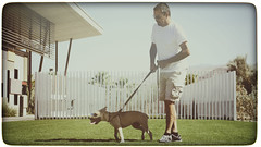 Palm Spring Animal Shelter (hbmike2000) Tags: california summer dog pet sun grass animal puppy fun outside nikon riverside shepherd palmsprings retro faded will coachellavalley d200 independence germanshepherd adopt inde animalshelter palmspringsanimalshelter hbmike2000