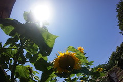 DSC08760 (RyanFranklinTits) Tags: birthday 4th july 2014 ryry