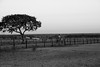 af1407_9873 (Adriana Füchter) Tags: trees brazil horses bw horse man tree beauty silhouette brasil rural caballo cheval farm side country symmetry burro pasto fries jumento cavalos ameland impressed pferde homem cavalo hombre finest natures equine fazenda chevaux paard paarden sweetface equino galope slott equines friese friesche pastando pferden pastagem mywinners friesische professionalequineimages