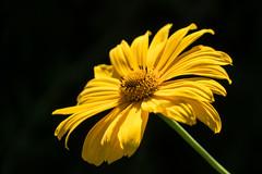 2014-07-19-Helmshagen-Garten-20140719-100621-i147-p0048-DSC-RX10-73.16_mm-.jpg