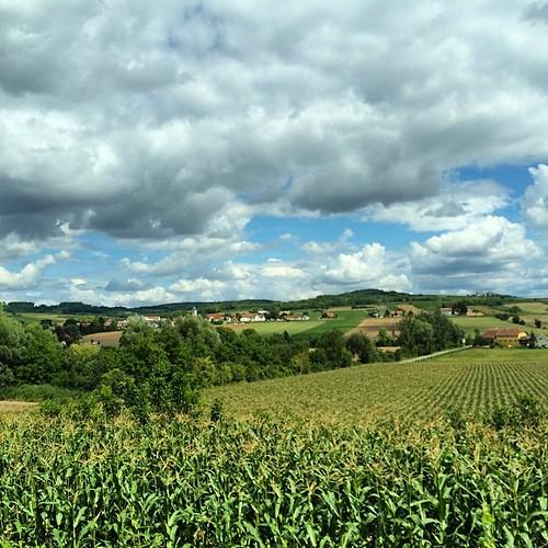 Waldviertel am Weg zur Hochzeit #landscape #austria #agriculture