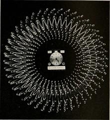 Anglų lietuvių žodynas. Žodis oscillograms reiškia oscilografijos lietuviškai.