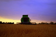 Combining into the night (Tigers Paw Photography) Tags: new sky green night golden day cloudy lancashire crop combine oats cereals harvester deutz fahr