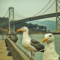 Pigeon Pier SF (Brunsfeldo) Tags: sf sanfrancisco pigeons baybridge