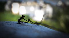 Strangled... (Puru Pawar) Tags: freedom nikon bokeh 1855 strangled d5200