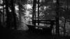 Schwarzwald after a rain (Nekr0n) Tags: leica trees blackandwhite bw film nature monochrome rain forest 35mm vintage germany dark bench ed deutschland blackwhite nikon kodak tmax cosina grain rangefinder ishootfilm m nostalgia negative doom 135 5000 freiburg 35 schwarzweiss baden wald coolscan schwarzwald blackforest m6 manualfocus baum f28 atmospheric regen voigtländer cv pii tmax100 umwelt leicam6 colorskopar tmx analoge primelens filmisnotdead messsucher imbreisgau voigtländercolorskopar3525