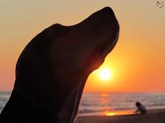 Sunset on the beach (mar.martin) Tags: sun beagle child beachbeagle atardecersunsetplaya