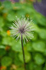 Har sett bedre dager (Birgit F) Tags: flowers grimstad dmmesmoen