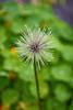 Har sett bedre dager (Birgit F) Tags: flowers grimstad dømmesmoen