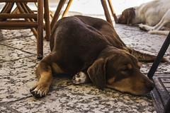 Randagio (Rcri) Tags: sleeping dog white black male dogs animal animals cane female canon eos sleep canine natura riposo e rest che resting randagio bianco nero animali animale tramp naure tramps cani dorme dormiente maschio randagi femmina 550d canidi rcri