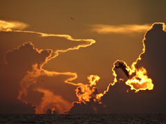 Birds at sunset - Gulf of Mexico (ashabot) Tags: ocean sunset orange pelicans gulfofmexico nature birds clouds golden evening florida seaandsky summerevenings