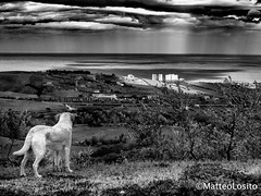 eye dog B&W (Nikomatt) Tags: sea bw dog eye landscape blackwhite view noiretblanc biancoenero