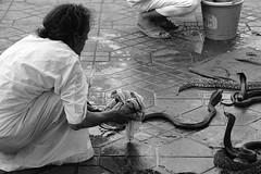 Marrakech (mattkayphotography) Tags: africa city sun snake south maroc marocco marrakech serpent snakes afrique marock