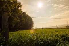 Afternoon Sun on the forest (#Alex Photography) Tags: wood sunset panorama sun grass photoshop fence lens landscape photography nikon afternoon lensflare flare d3200 kitobjektiv