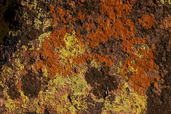 Dressed stone (marko.erman) Tags: stone covered lichen namibia dressed roche damaraland habillée couverte