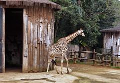 Image20 - Copia (Daniel.N.Jr) Tags: animal selvagem zoologico kodakz990