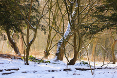 Winter / Hiver (tribsa2) Tags: nederlandvandaag marculescueugendreamsoflightportal wow bos forest foret winter hiver
