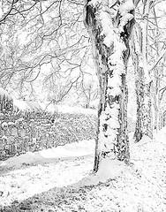 Charlotte St. 1 (alamme) Tags: winter snow street canandaigua ny upstate trees fingerlakes