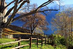 Val d'Aosta - Castello di Quart, la cisterna e gli alberi secolari (mariagraziaschiapparelli) Tags: valdaosta autunno allegrisinasceosidiventa quart castellodiquart castelli