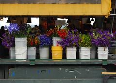SEATTLE:  MARKET (GD Taber) Tags: seattle farmersmarket pikeplacemarket washingtonstate