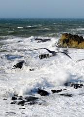 morocco (gerben more) Tags: sea bird water rock seagull wave morocco marokko essouira