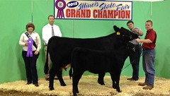"Champion Cow/Calf % Simmental Open '13 • <a style=""font-size:0.8em;"" href=""http://www.flickr.com/photos/25423792@N05/14251809889/"" target=""_blank"">View on Flickr</a>"