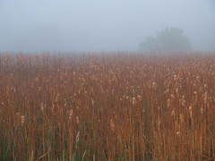 Fog Over Cat Tails (Drew Z) Tags: morning fog wisconsin oregon day fuji foggy fujifilm wi