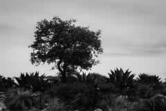 Querétaro -0882 (Jacobo Zanella) Tags: mexico queretaro travel mirador cuatropalos sierra gorda lookout panoramic mountains mountain range highlands landscape geology nature vast horizon vegetation open land awe tranquility solitude canonef2470mmf28lusm ef2470mmf28lusm canon 2014 jacobozanella jz76