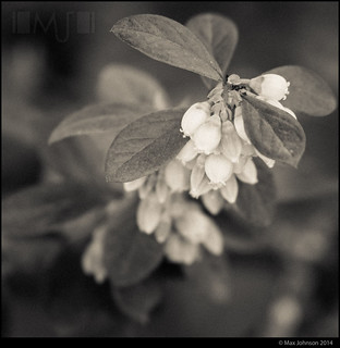 Ghostly Garden: Berry Bells