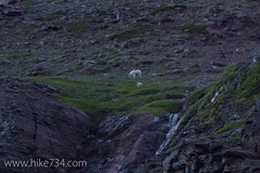 "Nanny and Kid Mountain Goat • <a style=""font-size:0.8em;"" href=""http://www.flickr.com/photos/63501323@N07/14423047867/"" target=""_blank"">View on Flickr</a>"