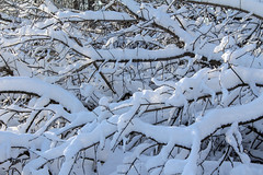 Fallen tree (lunarvogel) Tags: wood blue winter light shadow sky sun white snow black cold tree forest stem bush frost pattern bright russia bue web sunny freeze blanket trunk footsteps stick shrub tangle deciduousforest bole interlacing coverlet delineation interweaving