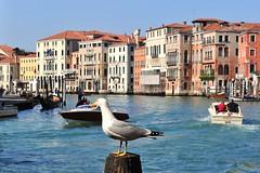 Venice, Italy, 2014 march, 30 204 (tango-) Tags: italien venezia italie
