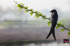 Ambition (thinkoddin) Tags: bird fauna composition forest idea thought wildlife frame concept inspirational sanctuary ambition quotation thinkoddin
