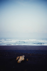 A drift wood (hardi_wb) Tags: ocean wood blue sea mist beach water vertical indonesia gold haze sand horizon wave driftwood foamy
