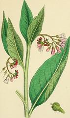 Anglų lietuvių žodynas. Žodis green gland reiškia žalia liauka lietuviškai.