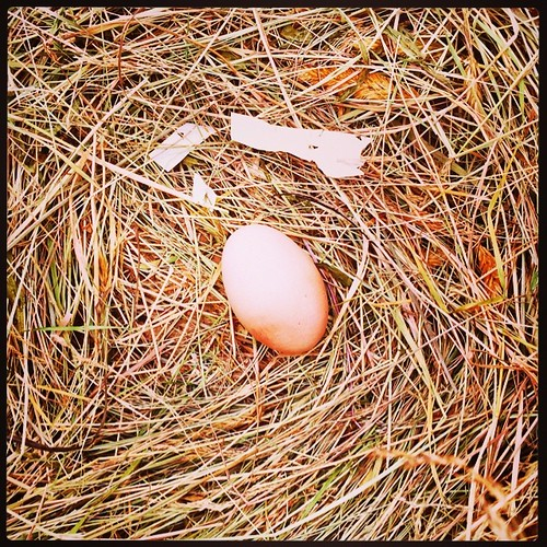 365/193 • the only egg for months, and it appears to be an anomaly • #2014_ig_193 #egg #winter #chooks #yesterday #latergram