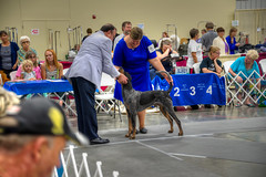 DMT_20140802131845 (Felicia Foto) Tags: people dog female illinois hound canine indoors mansbestfriend dogshow handler hdr allrightsreserved akc americankennelclub 1xp hdrfromasingleraw marionil denisetschida craborchardillinois craborchardkennelclub professionalhandler jessicarenfro