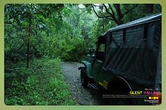 Silent Valley---------------04 (Binoy Marickal) Tags: tourism nature kerala mala palakkad evergreenforest silentvalleynationalpark nilgirihills mannarkkad mukkali kuzhur indiabinoymarickal