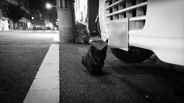 Today's Cat@2014-07-20