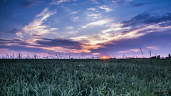 Sunset (Thom'Lattelais) Tags: sunset sun photography soleil photo photographer photographie champs coucher normandie campagne normandy eure normand photographe tourville normande hautenormandie lattelais