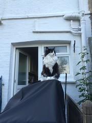 Elvis the cat.
