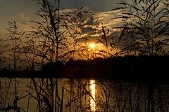 behind the scenes (Carmen Auriemma) Tags: sunset sea sky sun beach grass clouds canon seaside tramonto nuvole mare erba cielo behind sole spiaggia chioggia dietro 60d