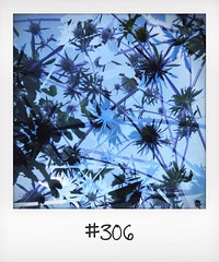 "#DailyPolaroid of 31-7-14 #306 • <a style=""font-size:0.8em;"" href=""http://www.flickr.com/photos/47939785@N05/14857202132/"" target=""_blank"">View on Flickr</a>"